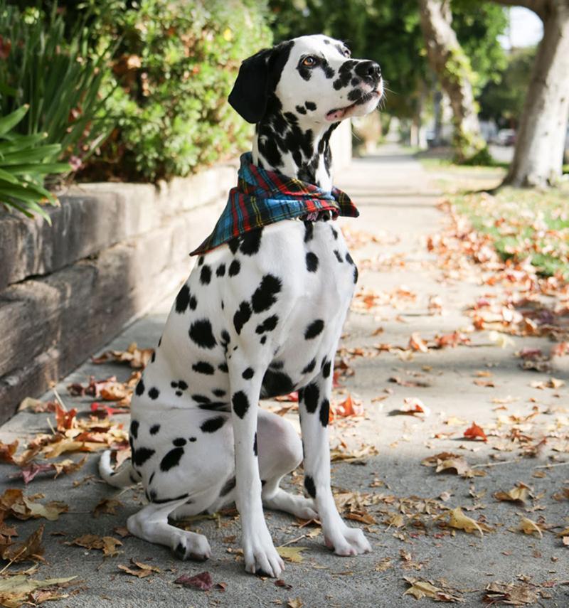 DIY-dog-bandana